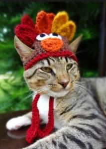 cat as turkey