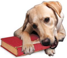 dog eating book